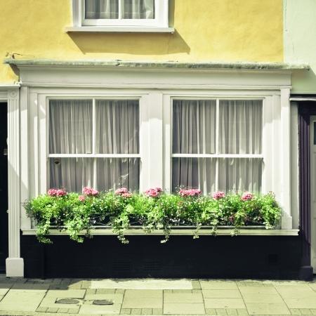 sunlgiht: Selection of plants on a cottage window ledge Stock Photo