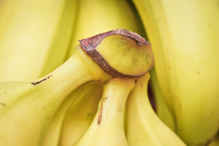 fairtrade: Close up of bunches of bananas with shallow depth of field