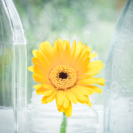 Yellow flower in a glass vase on a window sill photo