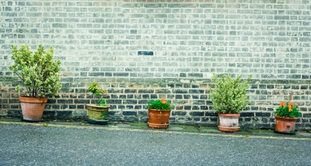 Row of outdoor plants in pots against a brick wall photo