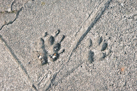 suface: Two paw prints set in a tarmac suface