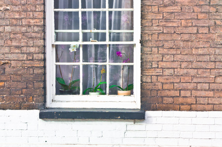 orchid house: Orchid plants in a window of a house Stock Photo