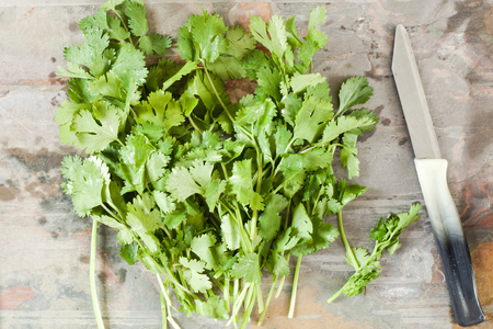 stone worktop: Fresh coriander leaves on a stone worktop with a knife