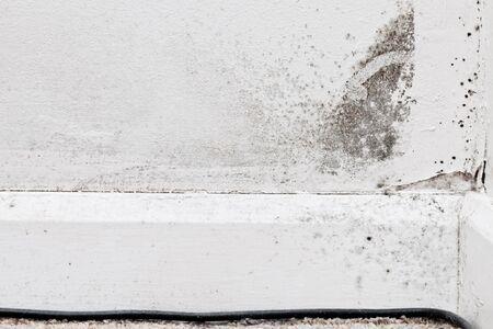 condensacion: El crecimiento del moho en una pared interior, debido a la humedad condiciones de frío Foto de archivo