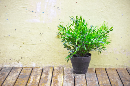 A small houseplant on a wooden table