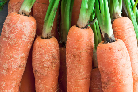 agrar: Close up of carrots with green stems