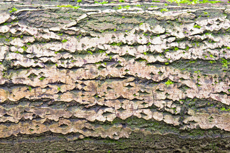 detailed image: Detailed image of part of an old tree trunk with bark and moss