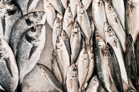 calmar: Fresh white fish at a market Stock Photo