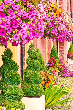 well maintained: A well maintained display of topiaries and hanging baskets