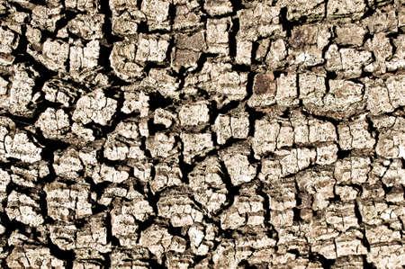 deatil: Deatil of old tree bark as a textured background