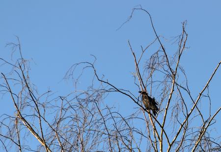 Turm in einem Baum im Herbst ohne Blätter. In der Nähe von Leeds im Vereinigten Königreich Standard-Bild - 87908559