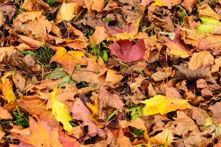 Blätter auf dem Boden im Herbst, sehr bunt mit Rot, Gelb und Braun. Standard-Bild - 90044116