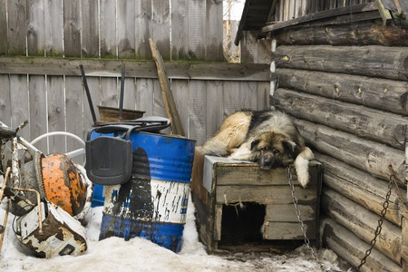 kennel: A dog on a chain lying on kennel in the yard of a private house