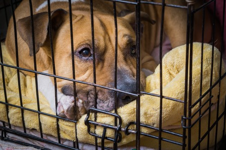 Locked in a cage cute domestic dog lying on a bed Stock Photo
