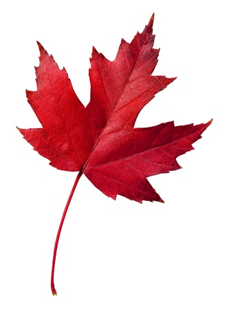 Colorful fall leaf with clipping path Stock Photo - 9711661