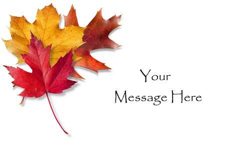 feuillage: Automne color� feuilles encadrant une zone de message