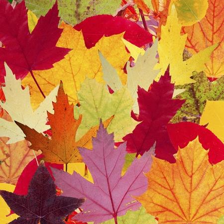 Eine Montage aus verschiedenen Baum Bl�tter zeigen ihre Herbstfarben Lizenzfreie Bilder