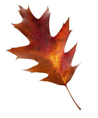 Bunte Herbst Blatt mit Clipping-Pfad
