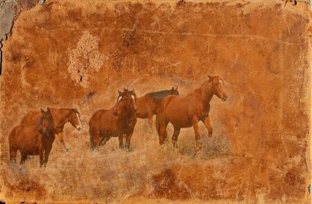 Wild mustang horses montaged on an old worn leather background photo