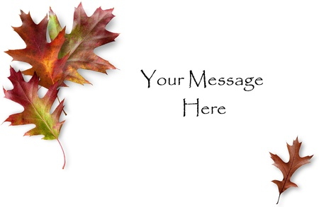 Colorful Fall Oak leaves framing a message area Stock Photo