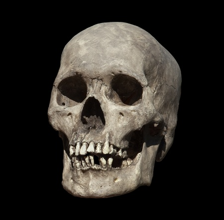 homo: Cast of a weathered human skull isolated on black