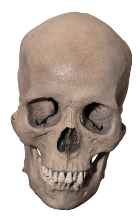 Downward looking skull that gives the illusion of smiling isolated on white.