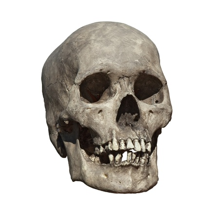 homo sapiens: Cast of a weathered human skull isolated on white