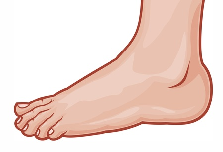 illustration of a foot standing (human foot)