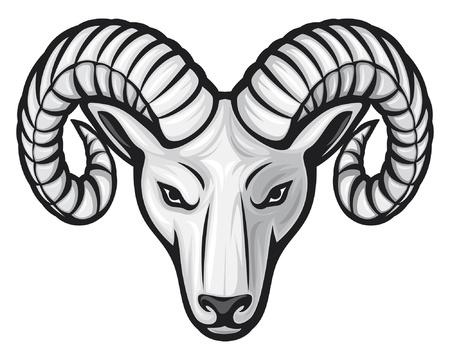 carnero: cabeza del carnero (cabeza de carnero)
