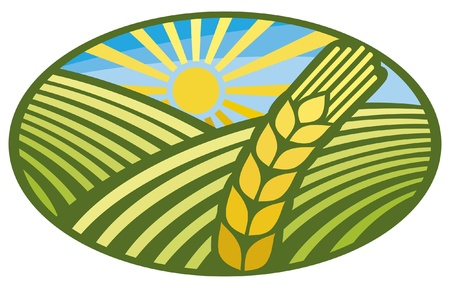 grain fields: wheat sign (wheat badge, design) Illustration