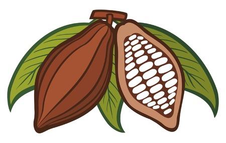 Cacao - Cacao en grano Ilustración de vector