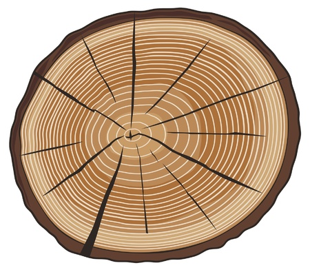 cruz de madera: anillos de los �rboles (secci�n transversal del �rbol, la secci�n transversal de madera, corte de madera, anillos de un �rbol cortado) Vectores