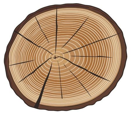 boomringen (doorsnede van de boom, hout doorsnede, houten knippen, ringen op een boom gesneden) Vector Illustratie