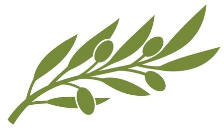 hoja de olivo: rama de olivo (s�mbolo de oliva) Vectores