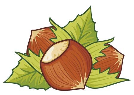 albero nocciola: nocciola