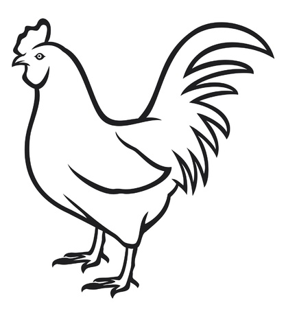 black and white farm: rooster  cock  agriculture