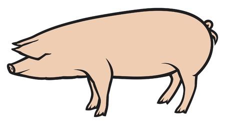 jabali: cerdo ilustración vectorial Vectores