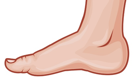 vector illustration of a foot standing  human foot