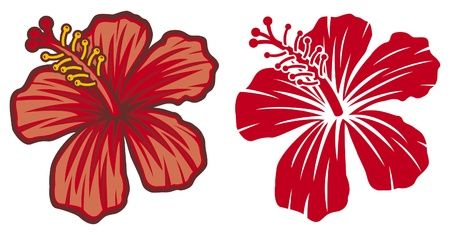 ibiscus: Bella rosso fiore di ibisco Vettoriali