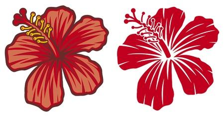 beautiful red hibiscus flower: Hermosa flor de hibisco rojo