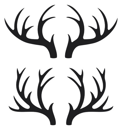 huge antlers: deer horns