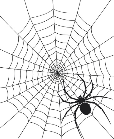black spider and spider web
