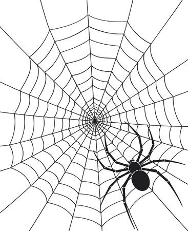 tarantula: black spider and spider web