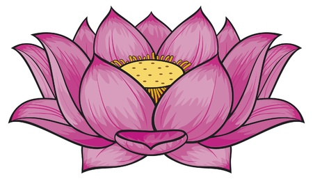 chinese flower: Lotus flower Illustration