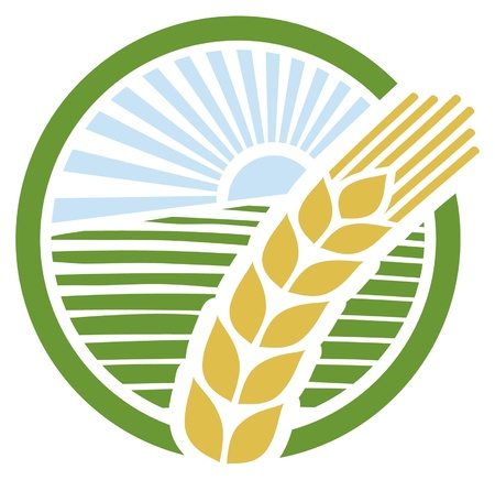 healthy grains: wheat sign, wheat badge,  wheat design