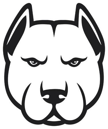 kampfhund: pit bull Kopf (pit bull terrier)
