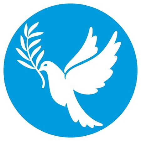 white dove: paloma de la paz (paloma de la paz, s�mbolo de la paz)