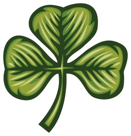 irish culture: Clover with three leafs  three leaf clover  Illustration