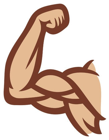 arm muscles: biceps  man s arm muscles, arm showing muscles and power  Illustration