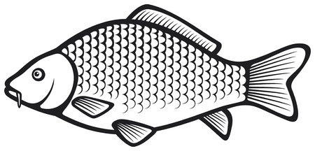carp fishing: Carpa pesce (carpa comune) Vettoriali
